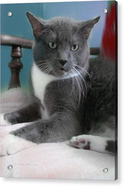 Cat Boticas Portrait  Acrylic Print