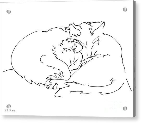 Cat Drawings 2 Acrylic Print
