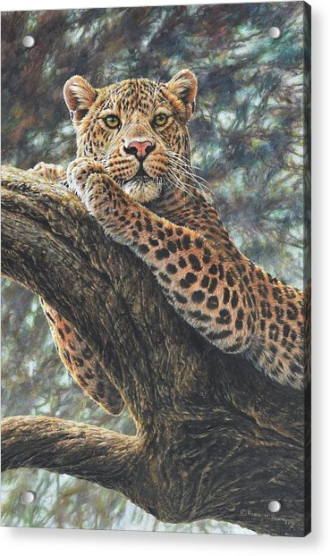 Acrylic Print featuring the painting Catching The Sun by Alan M Hunt