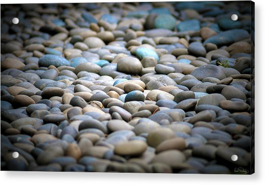 Centered Focus Acrylic Print