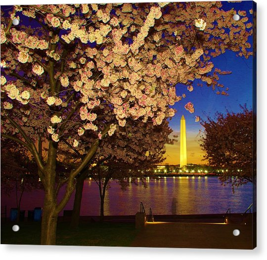 Cherry Blossom Washington Monument Acrylic Print