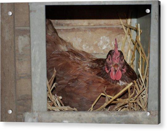 Chicken Box Acrylic Print
