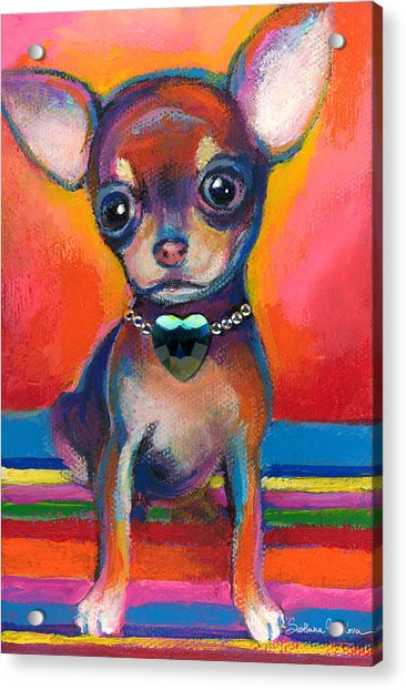 Chihuahua Dog Portrait Acrylic Print