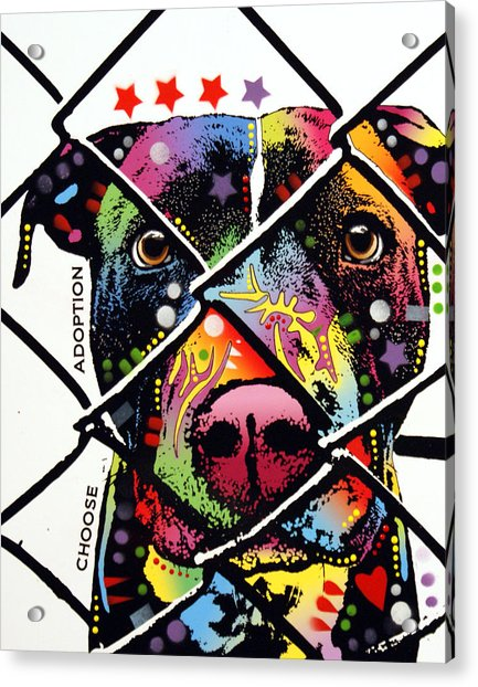 Choose Adoption Pit Bull Acrylic Print by Dean Russo Art