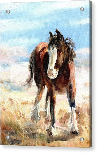Clydesdale Foal Acrylic Print