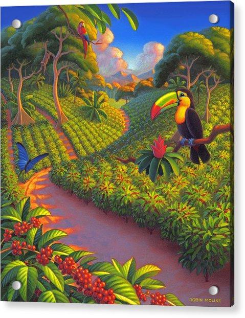 Coffee Plantation Acrylic Print