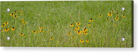 Colorful Field Acrylic Print