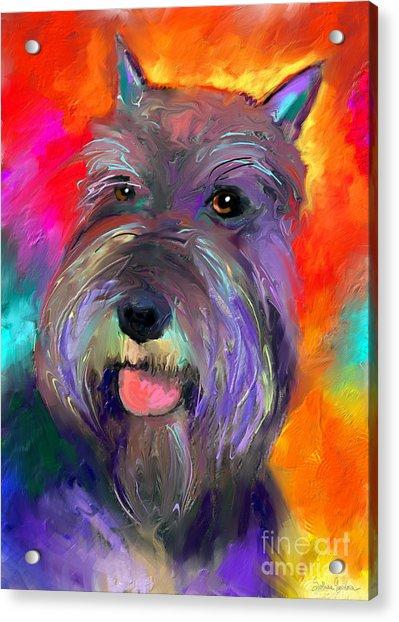 Colorful Schnauzer Dog Portrait Print Acrylic Print