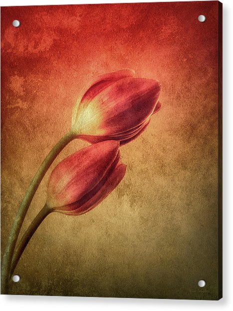 Colorful Tulips Textured Acrylic Print