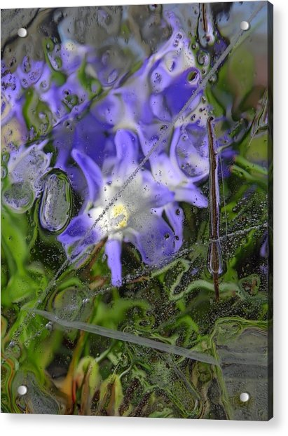 Colors Of Nature 6 Acrylic Print