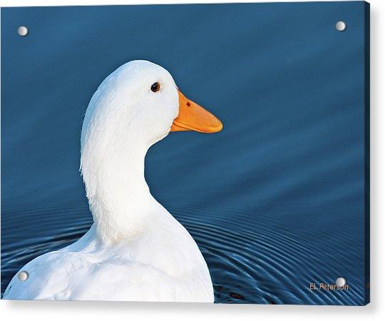 Come Swim With Me Acrylic Print