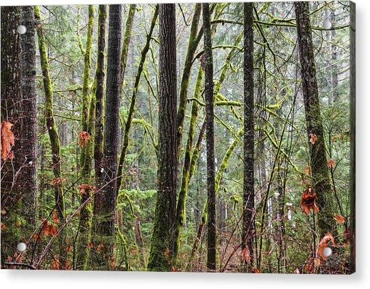 Comox Valley Forest-1 Acrylic Print
