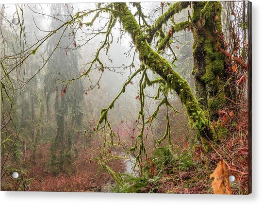 Mist In The Forest Acrylic Print