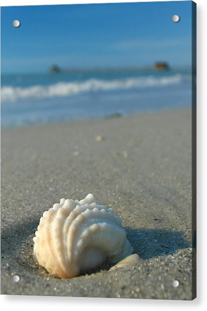 Conch Shell Acrylic Print