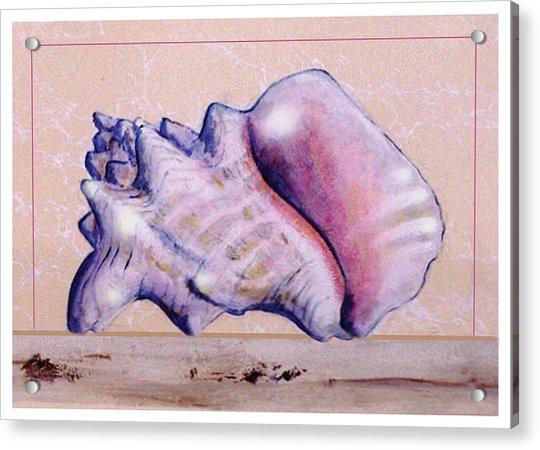 Conch Shell Acrylic Print
