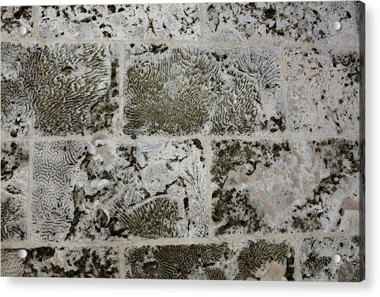 Coral Wall 205 Acrylic Print
