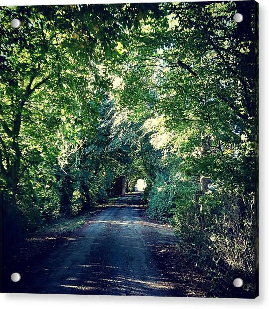 Country Lane, Tree Tunnel Acrylic Print