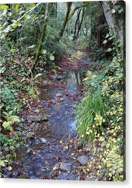Creek On Mt Tamalpais 2 Acrylic Print