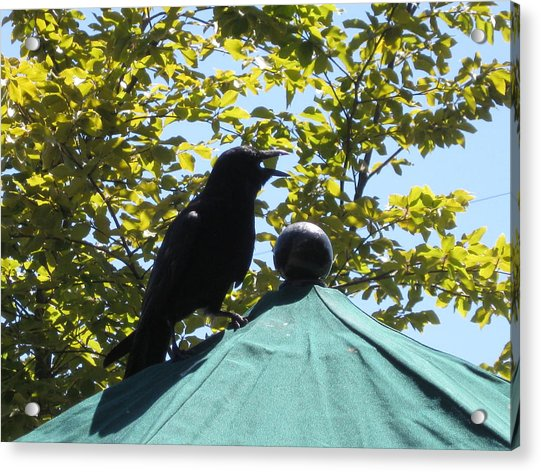 Crow On An Umbrella With Food Acrylic Print