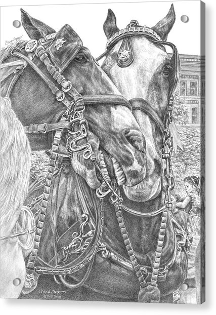 Crowd Pleasers - Clydesdale Draft Horse Art Print Acrylic Print