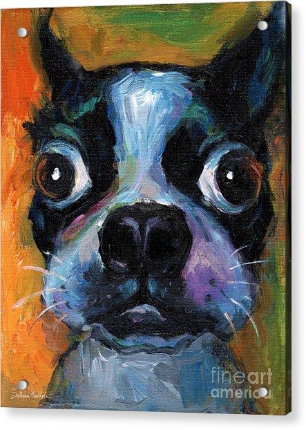 Cute Boston Terrier Puppy Art Acrylic Print