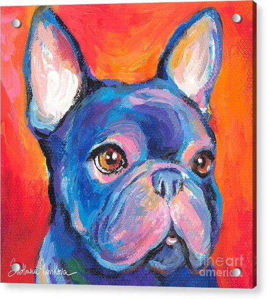 Cute French Bulldog Painting Prints Acrylic Print