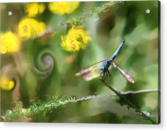 Dancing With Daiseys Acrylic Print