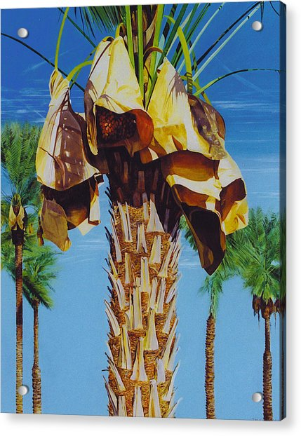 Date Palm Acrylic Print