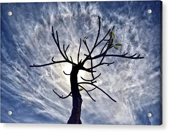 Dead Tree In St. Johns Antigua Acrylic Print