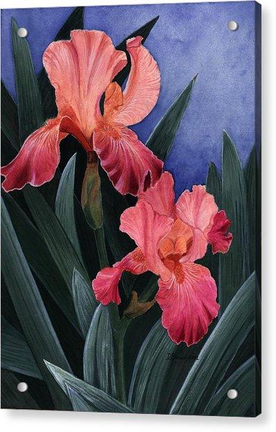 Debs Iris Acrylic Print