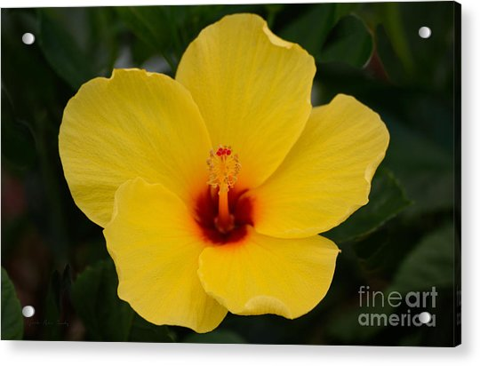 Decorative Floral Photo A9416 Acrylic Print