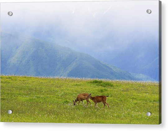 Deer In Browse Acrylic Print