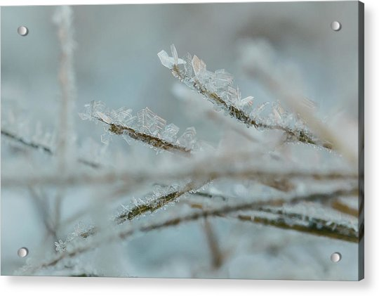 Delicate Morning Frost  Acrylic Print