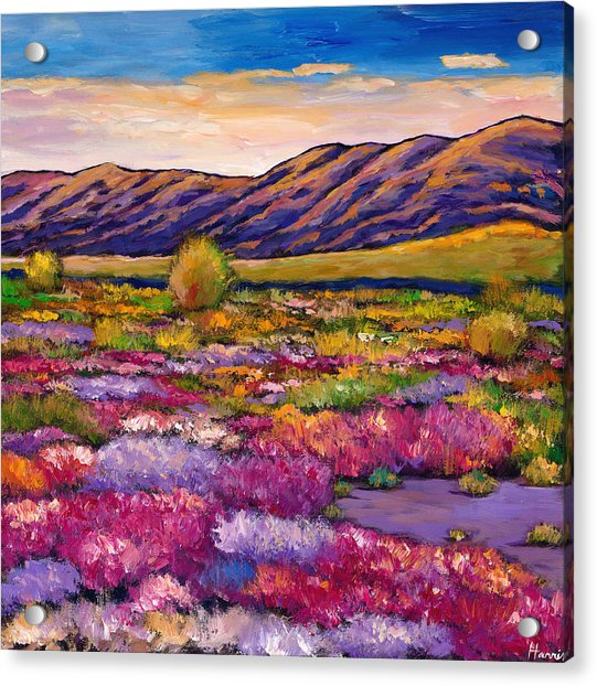 Desert In Bloom Acrylic Print