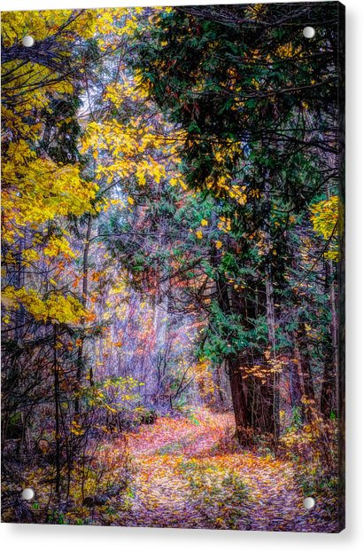 Distant Path Acrylic Print