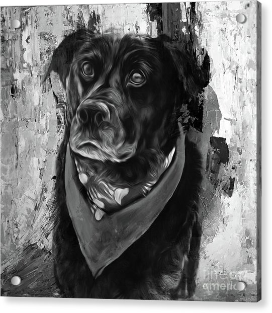 Dog 09ui Acrylic Print