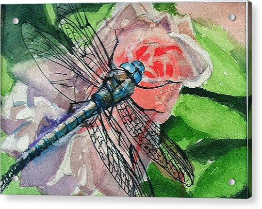 Dragonfly On Rose Acrylic Print
