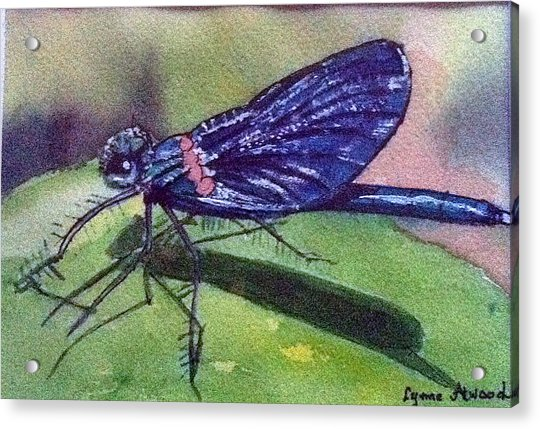Dragonfly With Shadow Acrylic Print