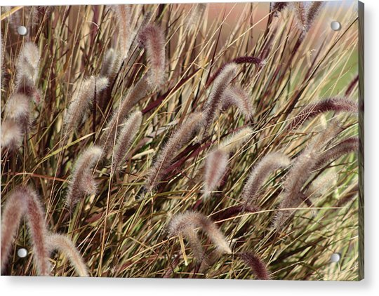 Dried Grasses In Burgundy And Toasted Wheat Acrylic Print
