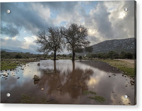Dried Tree Reflected Acrylic Print