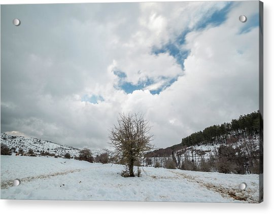 Dry Tree In The Snow Acrylic Print