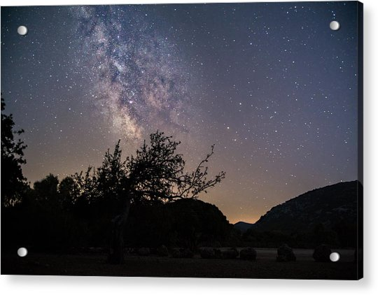 Dry Tree Under The Stars Acrylic Print