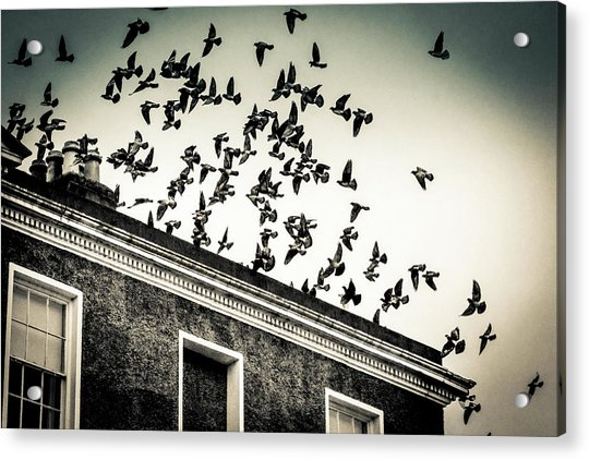 Flight Over Oscar Wilde's Hood, Dublin Acrylic Print