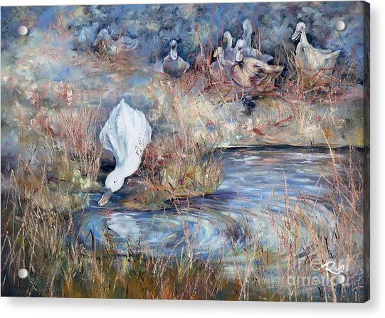 Ducks. Split Opposite Colour Harmony.  Acrylic Print