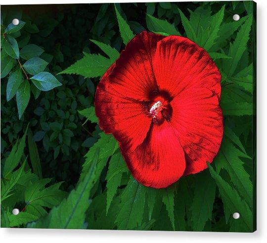 Dynamic Red Acrylic Print