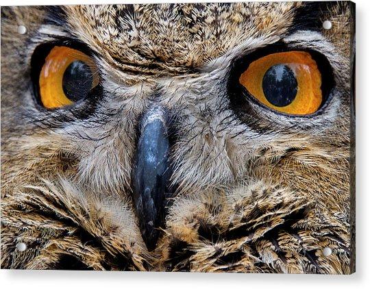 Eagle Eyes Acrylic Print