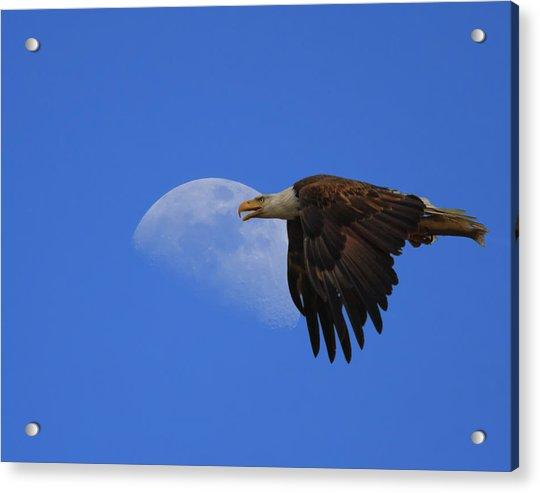 Eagle Moon Acrylic Print