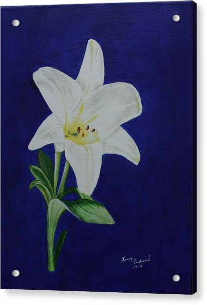 Easter Lily Acrylic Print