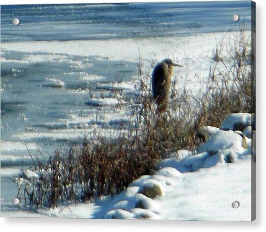 Egret Frozen Lake Acrylic Print