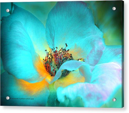 El Color De La Vida Acrylic Print